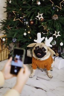 Chica tomando fotos de un perro en el teléfono cerca de un árbol de navidad