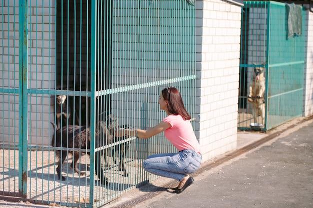 Chica voluntaria en la guardería para perros. refugio para perros callejeros.