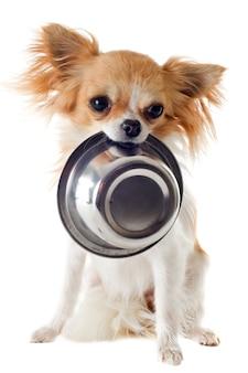 Chihuahua cachorro y plato de comida