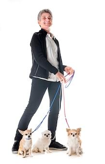 Chihuahuas, dueño y obediencia.