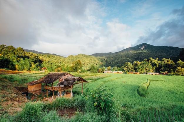 Choza en el campo de arroz en tailandia