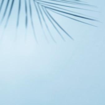 Cielo azul claro con rama de hoja