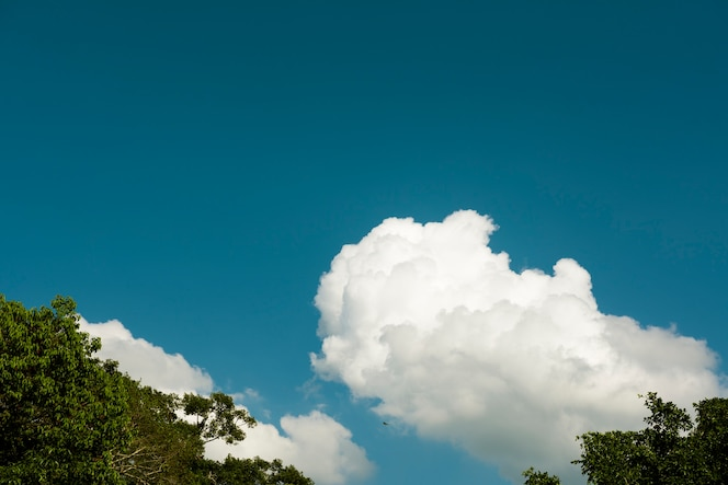 Cielo azul con algunos consejos de nube y árbol