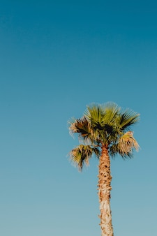 Cielo azul y una palmera