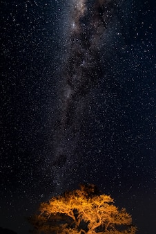 Cielo estrellado y arco de la vía láctea, capturado desde un oasis verde en el desierto de namib, namibia, áfrica.