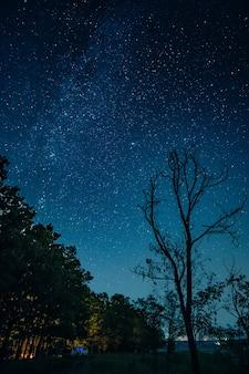 Cielo estrellado sobre el cinturón del bosque