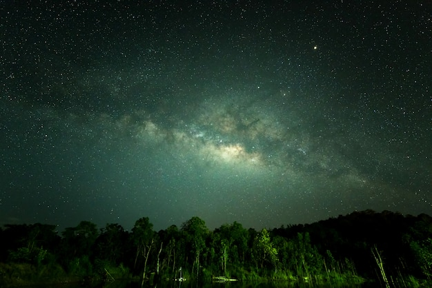 Cielo de noche con muchas estrellas en el invierno sobre bosque.