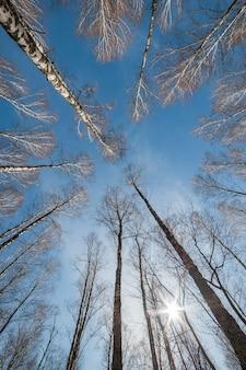 Cielo a través de los árboles, dejando