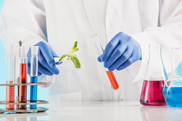 Ciencias de las plantas en laboratorio.