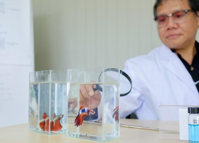 Científico senior mantenga lupa mirando pecera con tubo de ensayo