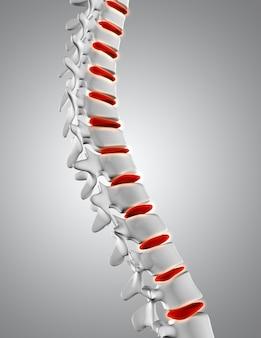 Cierre 3d de la columna vertebral con discos resaltados