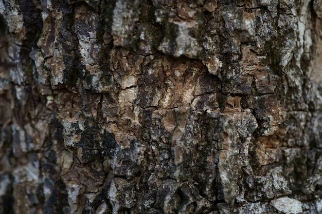 Cierre de fotograma completo de fondo de textura de corteza de árbol viejo