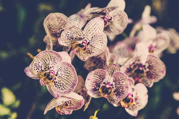 Cierre hermoso de la flor de las orquídeas de la diversión para arriba.