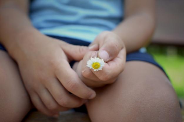 Cierre la mano del niño que sostiene una pequeña flor de margarita