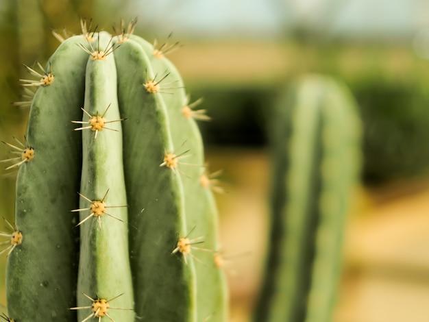 Cierre de tronco de cactus con fondo de espina naturaleza abstracta