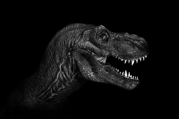 Cierre de tyrannosaurus rex para arriba en fondo oscuro.