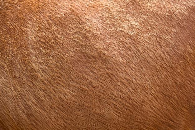 Ciérrese para arriba de escena marrón de la textura de las lanas suaves. piel esponjosa natural de oveja, vaca o ternera. calidez y confort.