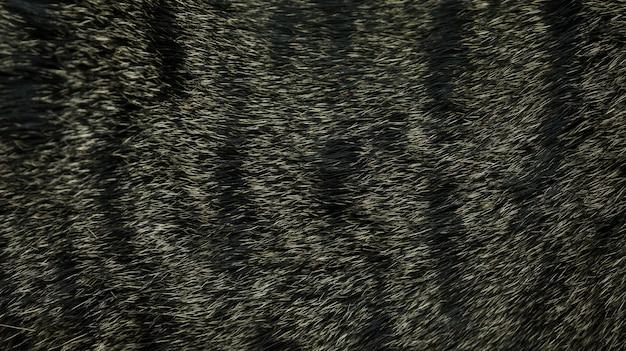 Ciérrese para arriba del gato rayado gris para un fondo.