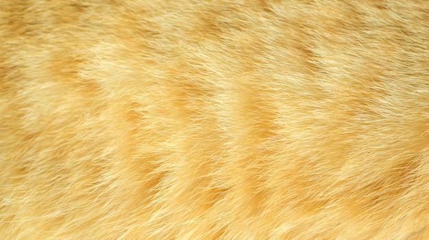 Ciérrese para arriba del gato rayado rojo para un fondo.