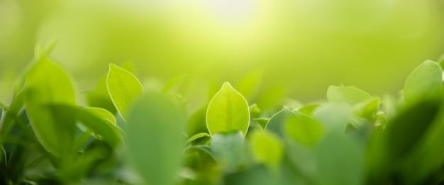 Ciérrese para arriba de la hoja del verde de la opinión de la naturaleza en fondo borroso del verdor bajo luz del sol con el paisaje natural de las plantas del fondo del bokeh y de la copia, concepto de la cubierta de la ecología.