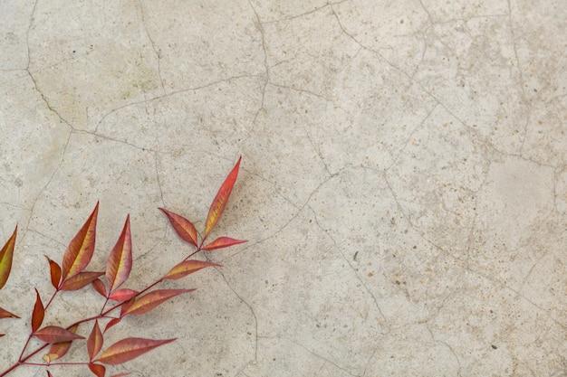 Ciérrese para arriba de la hoja verde y roja del otoño de la naturaleza en la tierra del cemento con el espacio de la copia.
