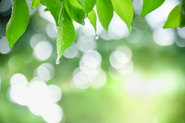 Ciérrese para arriba de la hoja verde de la vista de la naturaleza con gota de lluvia en fondo verde borroso bajo luz del sol con el fondo de las plantas naturales del paisaje del bokeh y de la copia,