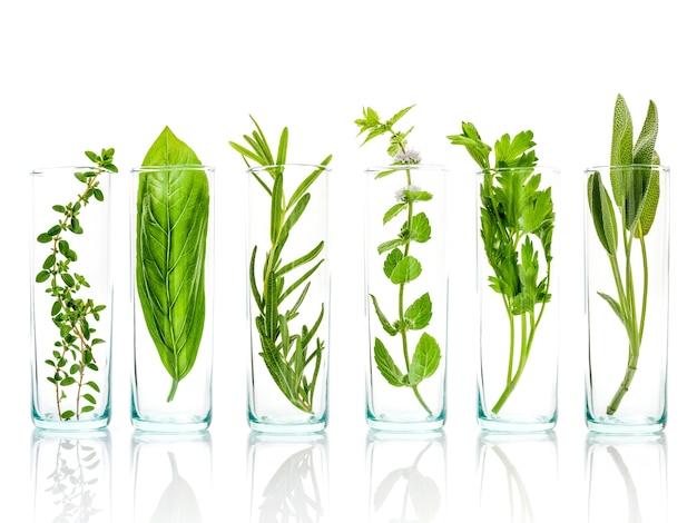 Ciérrese encima de las botellas de aceites esenciales con las hierbas frescas aisladas en el fondo blanco.