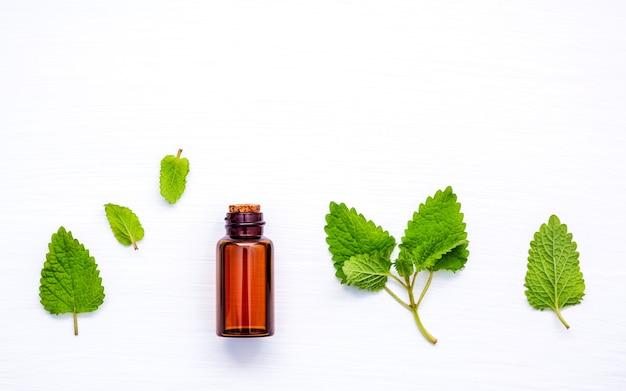 Ciérrese encima de las botellas de aceites esenciales con las hierbas frescas en el fondo blanco.