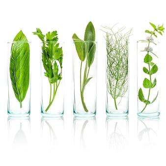 Ciérrese encima de las botellas de hierbas aromáticas frescas aisladas en el fondo blanco.