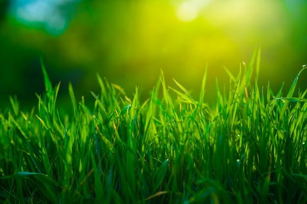 Ciérrese encima del campo de hierba en mañana soleada