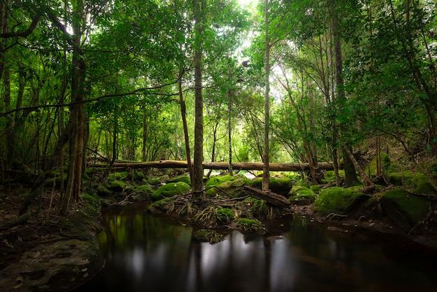 Ciérrese encima de la cascada de la visión en bosque profundo en el parque nacional, escena del río de la cascada.