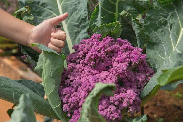 Ciérrese encima de granjero de la mano en jardín durante concepto del fondo de la comida del tiempo de mañana