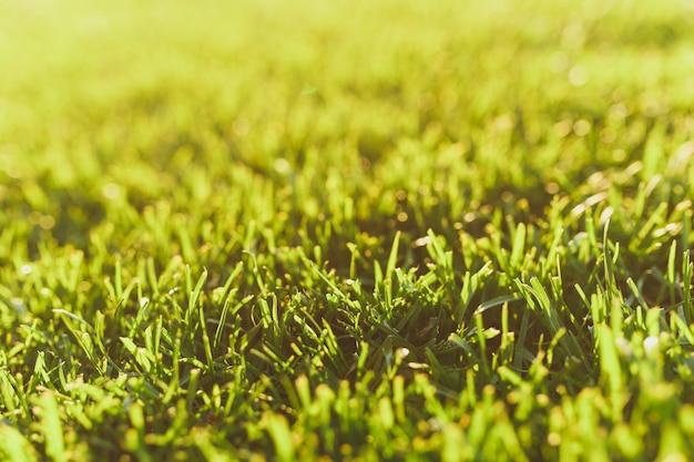 Ciérrese encima de la hierba fresca del golf del verde vibrante de la primavera, césped del sol. textura de la naturaleza, fondo verde para papel tapiz. enfoque suave. abstracto. diseño de concepto de campo o deportes de fútbol.