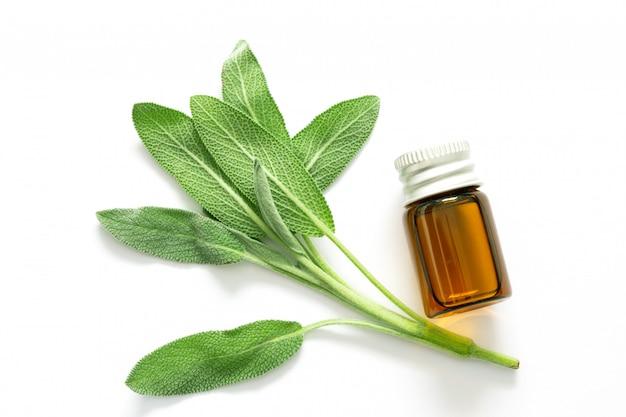 Ciérrese encima de la hoja verde fresca de la hierba de salvia con una botella de aceite esencial en blanco