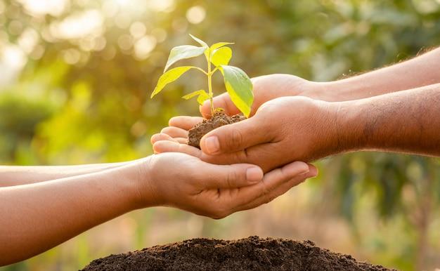Ciérrese encima de la mano que sostiene el brote verde joven del árbol y que planta en suelo