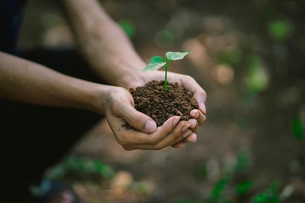 Ciérrese encima de las manos humanas que sostienen una planta joven en suelo