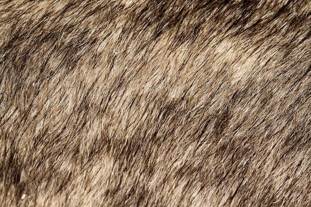 Ciérrese encima de la piel gris y del fondo del perro
