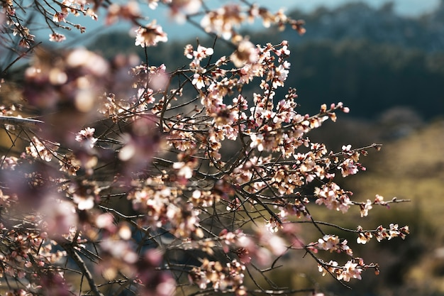 Ciérrese encima de ramas florecientes del tiro