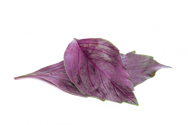Ciérrese encima del tiro del estudio de las hojas frescas de la hierba roja de la albahaca aisladas en blanco. albahaca de ópalo oscuro púrpura