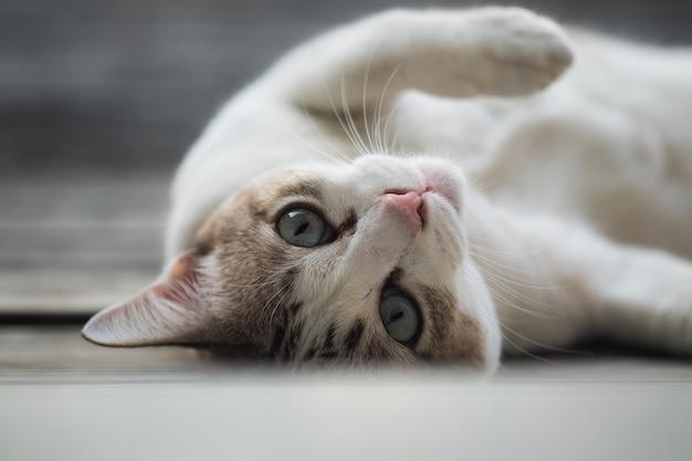 Ciérrese encima de la vista de un gato lindo, foco selectivo.