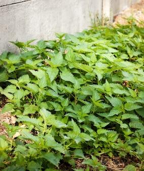 Ciertas especies de plantas que crecen junto a un muro de hormigón gris