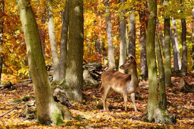 Ciervo adorable entre los árboles