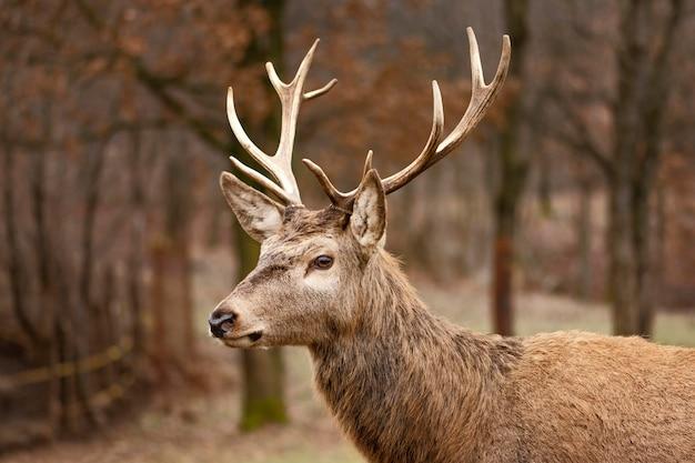 Ciervos capturados en el bosque salvaje