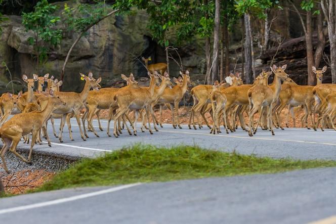 Ciervos cruzando el fondo de la calle