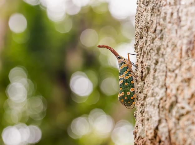 Cigarra verde en el árbol