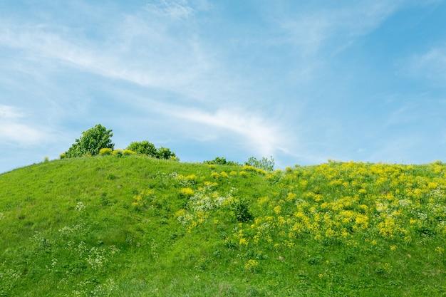 Cima de la colina con pasto verde y dientes de león amarillos.