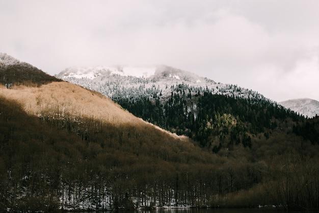 Cima de la montaña cubierta de nieve con bosque de coníferas en montenegro