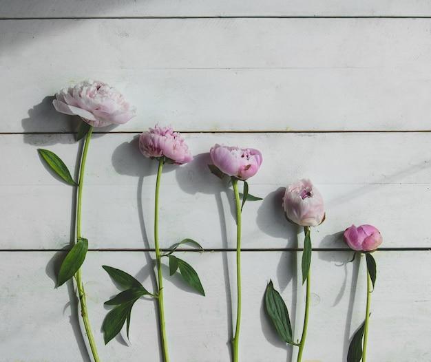 Cinco peonías moradas de rama única en una pared de madera blanca