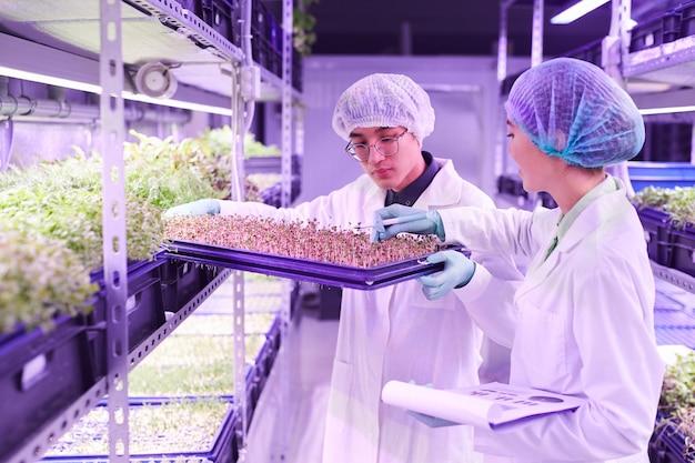 Cintura para arriba retrato de dos jóvenes trabajadores examinando nuevos brotes en bandeja en invernadero de vivero, espacio de copia