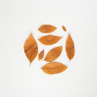 Círculo de hojas de otoño